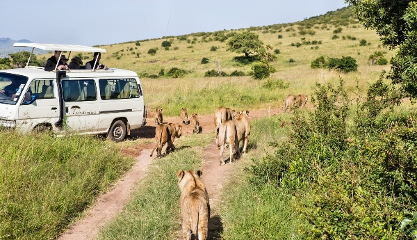 4 DAYS KENYA BUDGET SAFARI MAASAI MARA AND LAKE NAIVASHA.